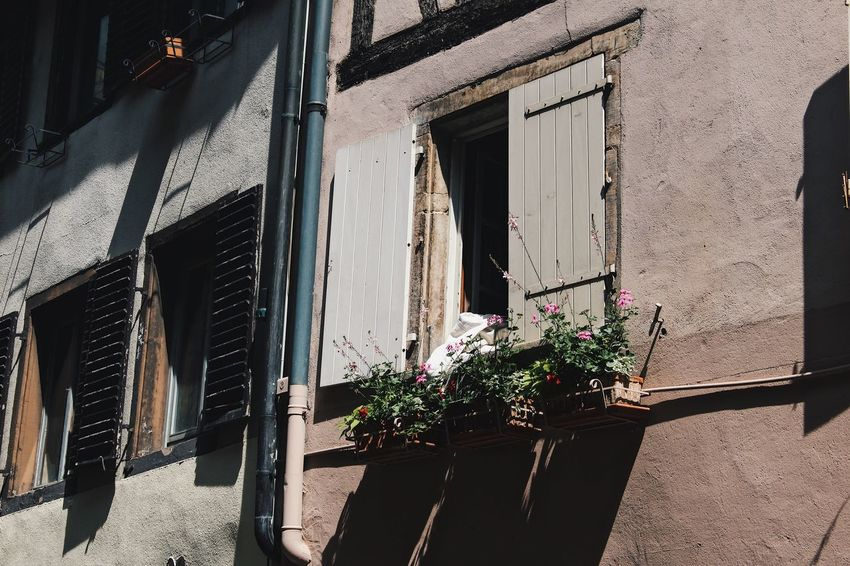 Strasbourg Resist No People Window Architecture Building Exterior Flower Built Structure Sunlight Outdoors Plant Balcony Growth Day Shadow Window Box Nature