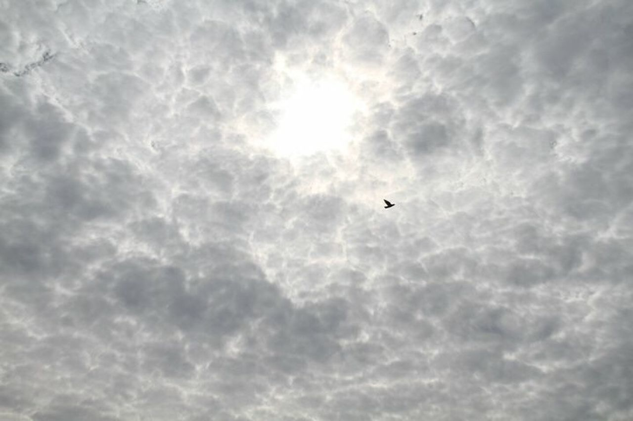 flying, one animal, bird, animal themes, animals in the wild, cloud - sky, mid-air, low angle view, sky, day, animal wildlife, outdoors, no people, nature, spread wings, beauty in nature