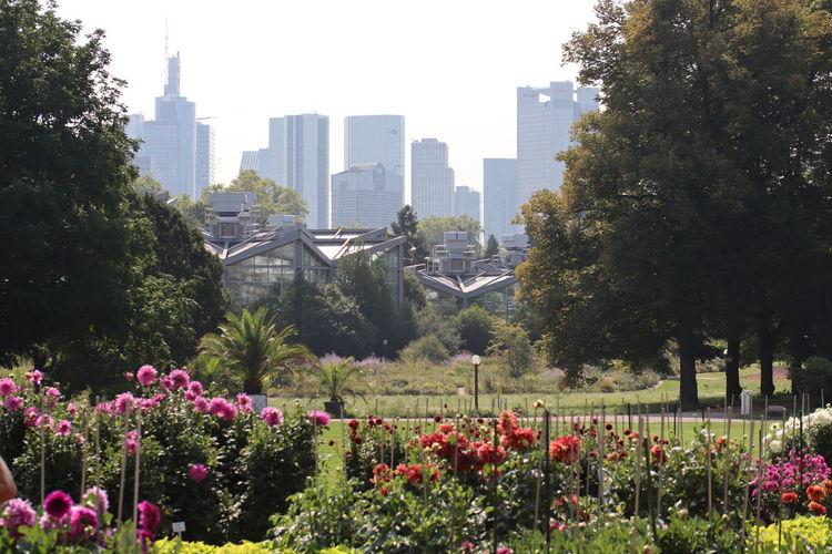Flowering plants and trees in park against buildings in city