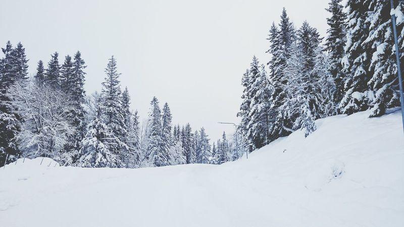 Walking Around Snowy Days... Snow ❄ Snow Snow Day