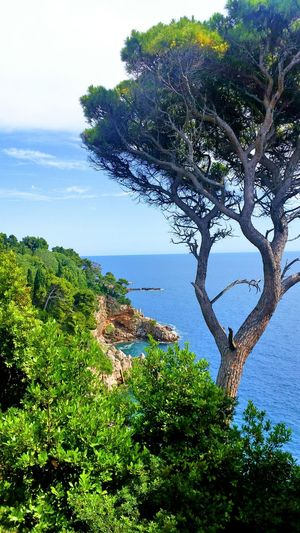 Croatia Horizon Over Water Beach Scenics No People Outdoors Tranquility Tranquil Scene Plant Blue Lifesabeach  Water Dubrovnik Shadesofblue Beauty In Nature Day Beautifulday Summer Vibes Green Color Tree Naturesgift Couldgetusedtothis Viewfromthetop Bluesky Cielomania