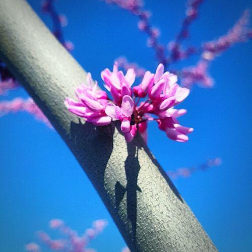Pink Spring 🌸 Blue&pink Spring Canitbehot.?