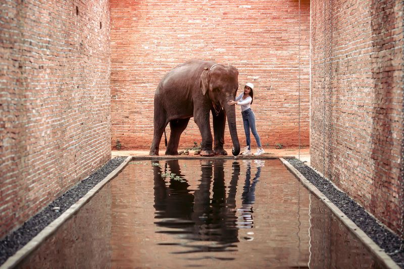 View of elephant standing in water