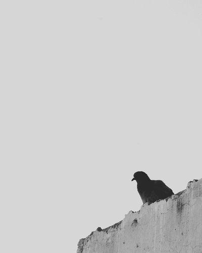 Bird on a wall