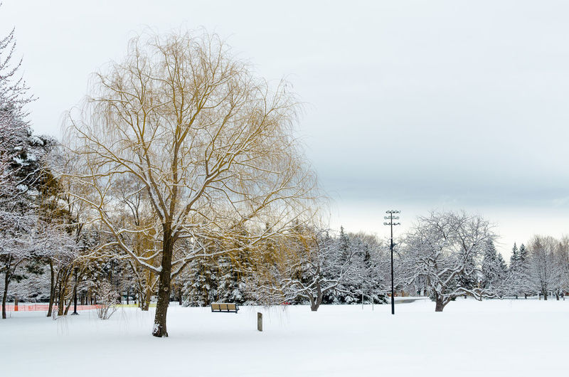 Bare Tree Beauty In Nature Branch Canada Cold Temperature Day Nature No People Outdoors Play Ground Pool Cue Scenics Sky Snow Snow Covered Snow Wallpaper Snowing Tranquil Scene Tree Winter Winter