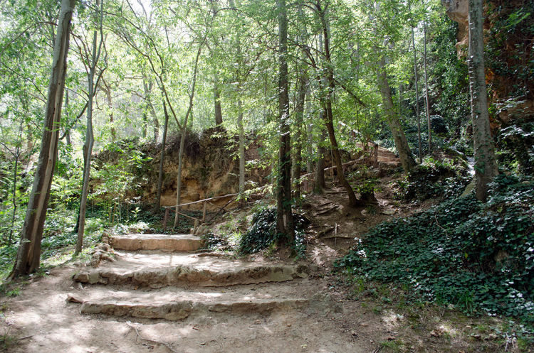 Monasterio de Piedra 2015  Beauty In Nature Day Eco Tourism Eddl Forest Growth Landscape Monasterio De Piedra Monastery Monastery Of Stone Nature No People Outdoors Scenics Stone's Monastery Tranquility Tree