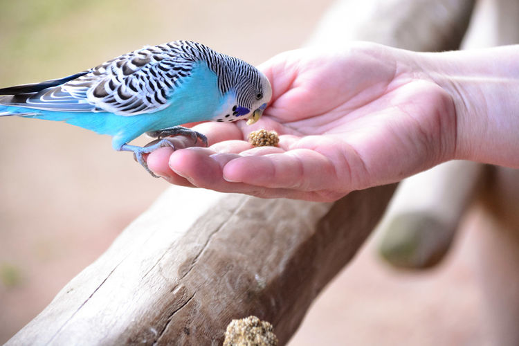Bird Only Women One Animal Human Body Part One Woman Only Adults Only Perching Animal Themes Animals In The Wild Human Hand Animal Wildlife One Person People Day Focus On Foreground Adult Outdoors Pets Close-up Nature