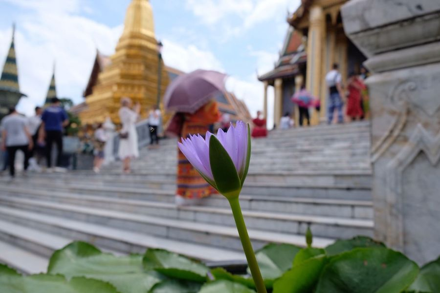 Buddhism Temple Buddhism Flower Architecture Built Structure Building Exterior Religion Belief Incidental People Place Of Worship Growth