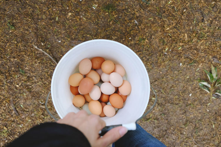 High angle view of hand holding eggs in container