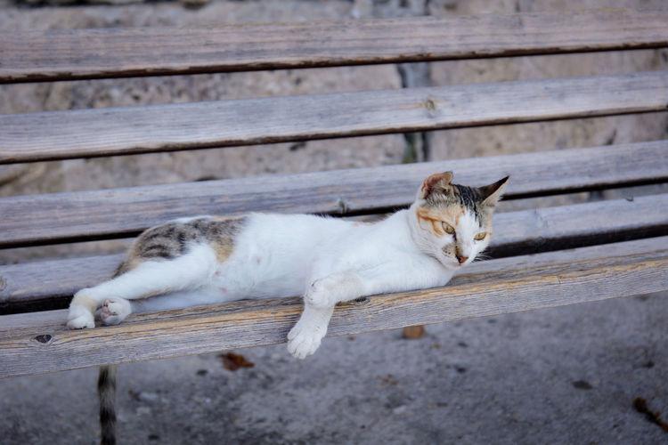 Cat resting on wood