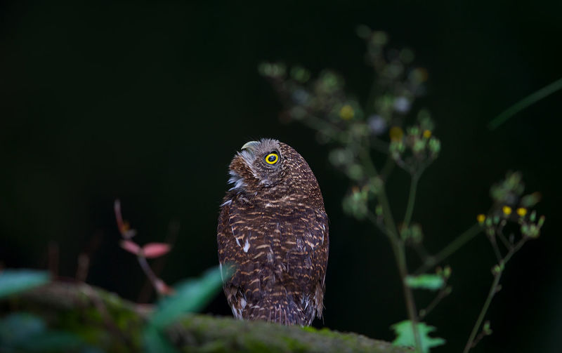 Close-up of owl perching on leaf