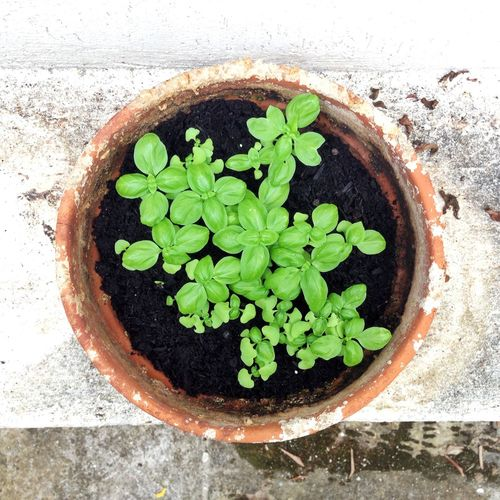 High angle view of potted plant growing outdoors
