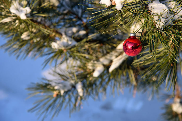 Close-up of christmas tree in winter