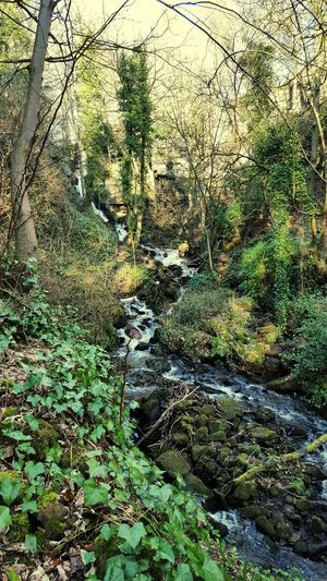 A Walk In The Woods At Home With Nature Lumsdale Ruins Waterfall Arkwrights Mill
