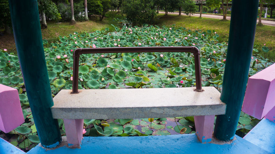 Lotus Flowers -
