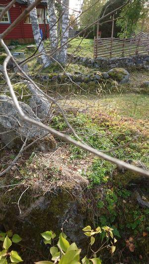 Grass Slide -