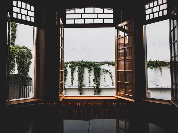 Work Jalisco Guadalajara Window Growth Plant Potted Plant Indoors  Architecture Day No People Window Sill Built Structure Home Interior