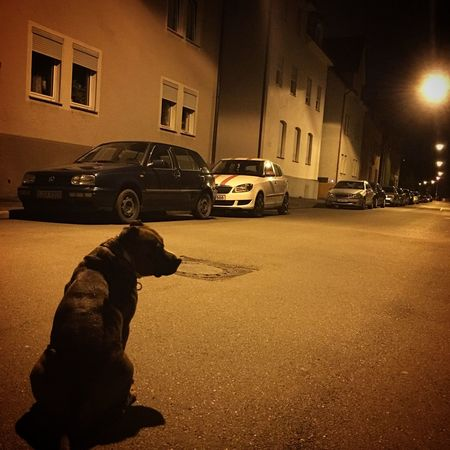 Street Night Buddhabull Stuttgart Staffolution Hotstaff Staffylovers Dog Wanderlust Kesselliebe Staffies There Softer Than You Think Staffordshirebullterrier Urban Landscape 0711 Staffy Happydog Staffylove Staffordshire Bull Terrier Winngrin Benztown Animal Themes No People