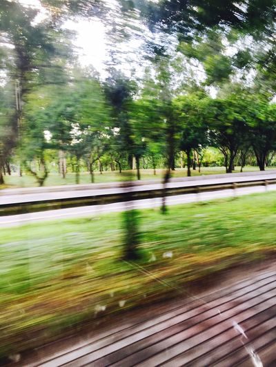 Jungle Motion Road Roadtrip Speed Day