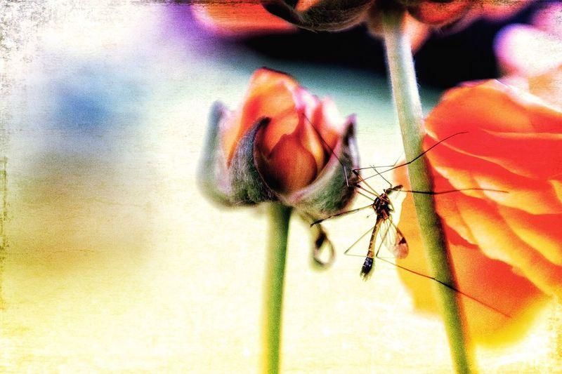 Skeeter Eater Lensbaby  Softfocus DistressedFX Spring Flowers Springtime Macro Abstract