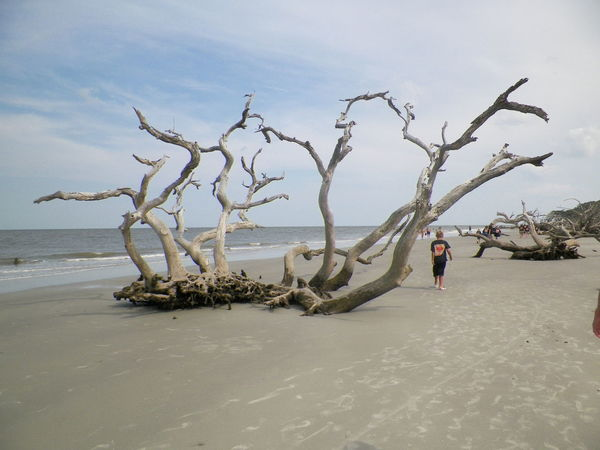 Beach Beauty In Nature Day Horizon Over Water Incidental People Jekyll Island Leisure Activity Nature Outdoors Sand Scenics Sea Shore Sky Tranquil Scene Tranquility Tree Vacations Water