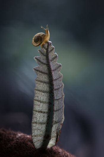 The Top of the Tower Animal Animal Themes Animal Wildlife Animals In The Wild Beauty In Nature Caterpillar Close-up Day Dry Focus On Foreground Insect Invertebrate Leaf Nature No People One Animal Outdoors Plant Plant Part Selective Focus