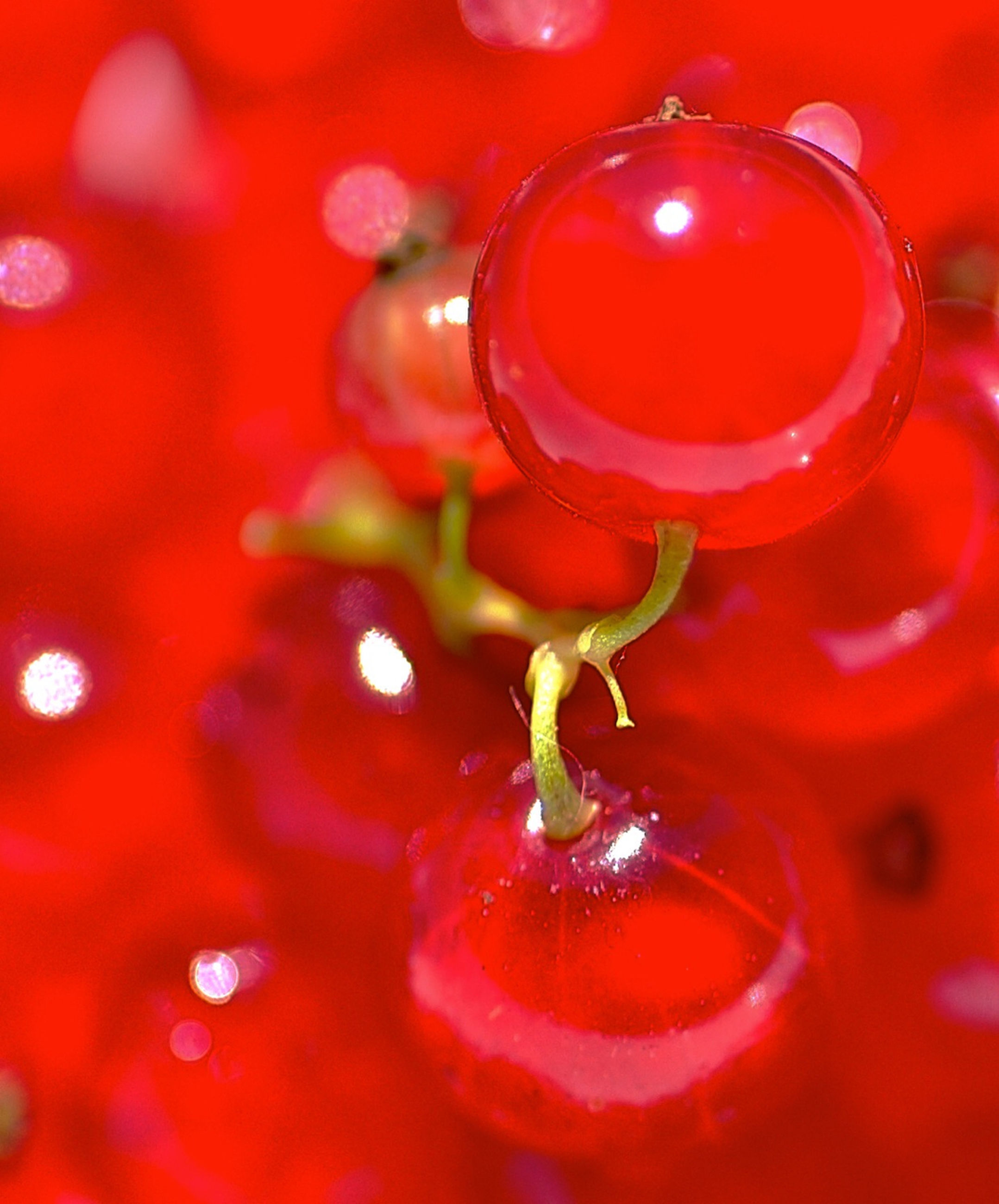 red, freshness, close-up, water, drop, food and drink, wet, selective focus, healthy eating, indoors, focus on foreground, no people, still life, food, backgrounds, full frame, detail, fruit, vibrant color, day