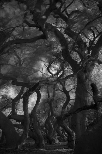 Mysteriousforest Mystic View Mysterious Mystery Forest Mysterious Place Mysterious Tree Black & White Black And White Blackandwhite Photography Black And White Photography Fagus Sylvatica Var. Tortuosa Fagus Sylvatica My Favorite Place Monochrome Photography From My Point Of View Eyeem Market EyeEm Gallery capturing motion Welcome To Black Long Goodbye Neon Life EyeEm Selects EyeEmNewHere Breathing Space Investing In Quality Of Life Your Ticket To Europe The Week On EyeEm Mix Yourself A Good Time Discover Berlin Been There. Done That. Lost In The Landscape Connected By Travel Second Acts Be. Ready. Black And White Friday EyeEm Ready   AI Now An Eye For Travel Go Higher Visual Creativity Summer Exploratorium #FREIHEITBERLIN