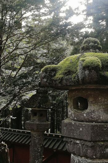 Moss Stone Lantern Toshogu Shrine Nikko Unesco Asian Culture Japanese Culture Japan Travelphotography Nature Naturephotography Naturecollection Naturelovers EyeEm Nature Lover EyeEm Japan