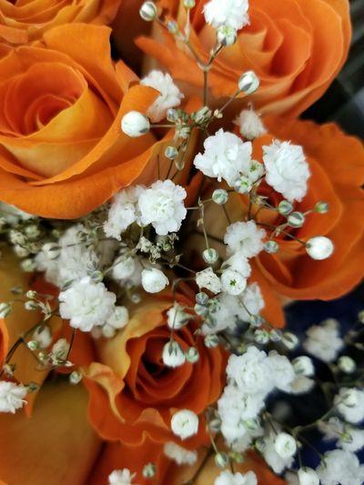 love babysbreath Beauty In Nature EyeEm Nature Lover Babysbreath Orange Color Flower Head Flower Petal Full Frame Orange Color Close-up In Bloom Plant Life Single Rose