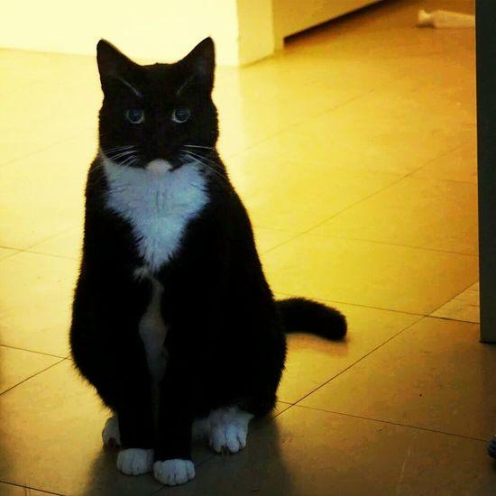 My cat, Zorro. Pets Pet Photography  Cats