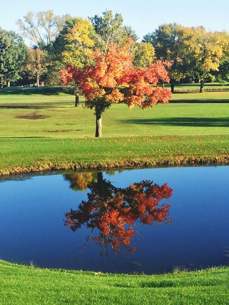 TakeoverContrast Tranquil Scene Field Water Tranquility Beauty In Nature Scenics Green Color Growth Grassy Nature Autumn Change Blue Day Lawn Park Orange Color Outdoors Winter Is Coming Leaves Changing Colours EyeEm Gallery EyeEm Nature Lover EyeEm Best Shots - Nature