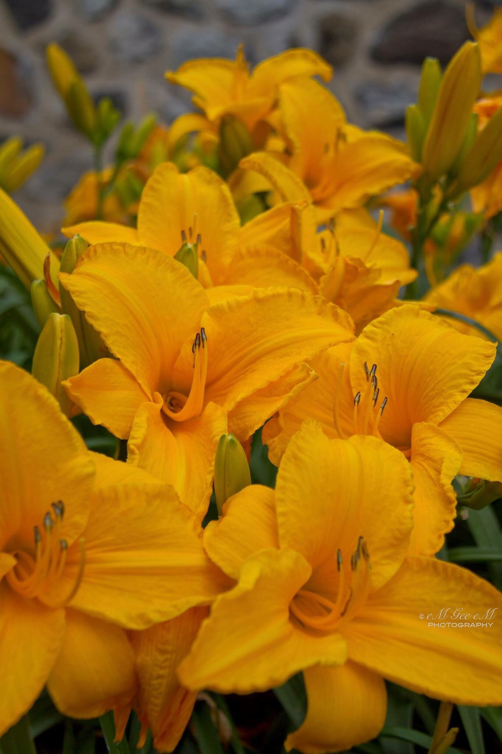 flower, fragility, yellow, beauty in nature, growth, nature, petal, freshness, flower head, close-up, plant, blooming, focus on foreground, no people, outdoors, day, day lily