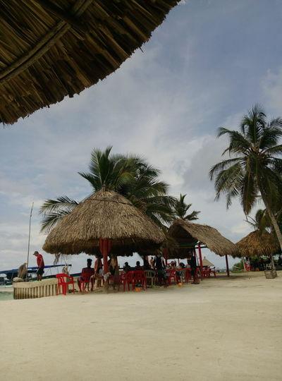 Beach Palm Tree Vacations Sea Sand Day Sky Travel Destinations Tourism Vive Colombia Viaja Por Ella Colombia Archipielago Travel