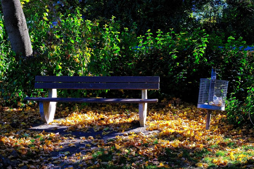 Absence Autumn Bench Empty Nature Outdoors Park Bench Seat Wood - Material