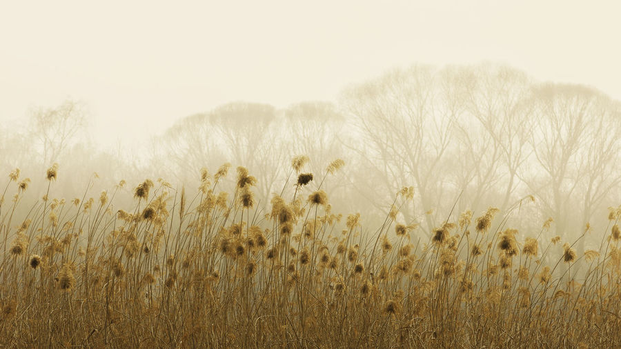 霾 环境 污染 Nature Plant Outdoors Grass Beauty In Nature No People Beauty Sky