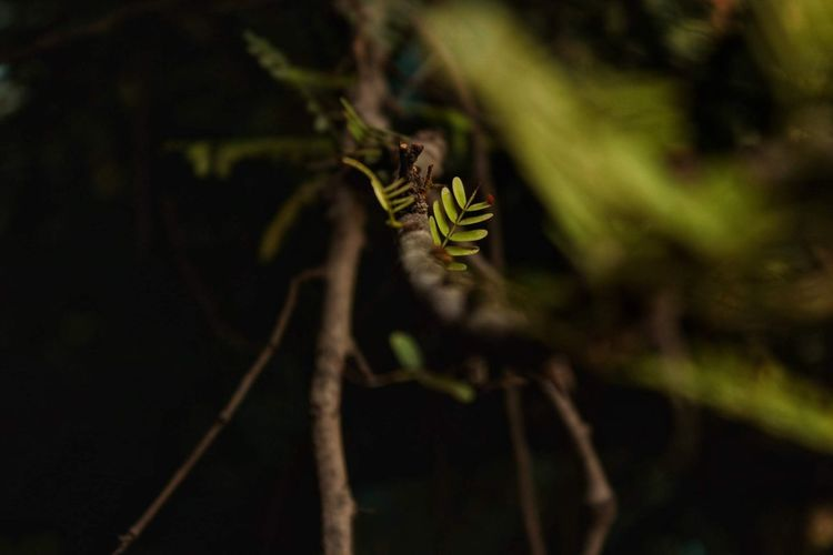 Reptile Full Length Camouflage Close-up Animal Themes Branch Dragonfly Insect Tree Trunk Bare Tree Flower Tree Bug Woods Butterfly - Insect Housefly Ladybug Bark Animal Antenna Symbiotic Relationship Gecko Lizard Chameleon Damselfly Iguana Animal Wing Praying Mantis Pollination Perching Caterpillar Ant