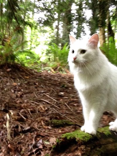 An old picture of a young soul One Animal Animal Themes Domestic Cat Domestic Animals Pets Mammal Feline Tree Nature Day Forest Outdoors No People Portrait Close-up White Cat White EyeEmNewHere Let's Go. Together.