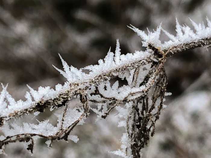 Morning Ice Snow Cold Temperature Winter Frozen Focus On Foreground Close-up Ice Frost Day No People Plant Nature White Color Beauty In Nature Covering Twig Tree Branch Outdoors Extreme Weather Blizzard Cold Dead Plant
