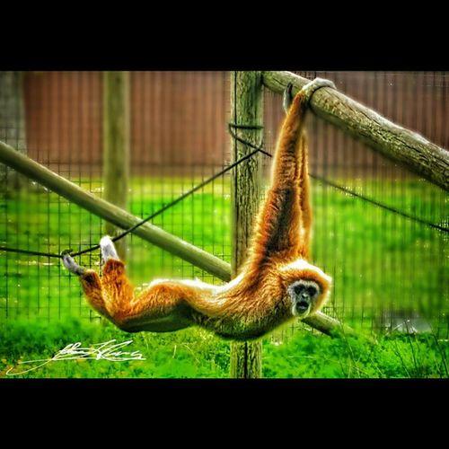 Squareinstapic Zoo Cute Animals Wildlife Dispiteallmyrage Justaswinging Richmondmetrozoo