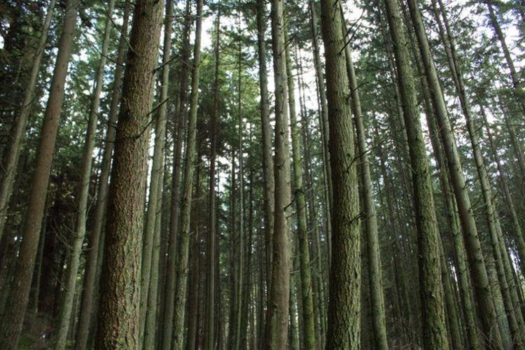 Stanley Park Canonrebelt5 Trees