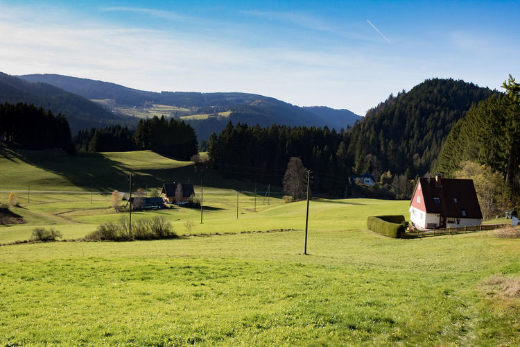 the Beauty of black forest in Germany Hochschwarzwald Forest Photography Forestwalk Blackforest Blackforest Germany Ravennaschlucht Schwarzwald Autumn Schwarzwald Schwarzwalders Schwarzwaldliebe Tree Mountain Sky Grass Landscape Pine Woodland Farmland Cultivated Land WoodLand Forest