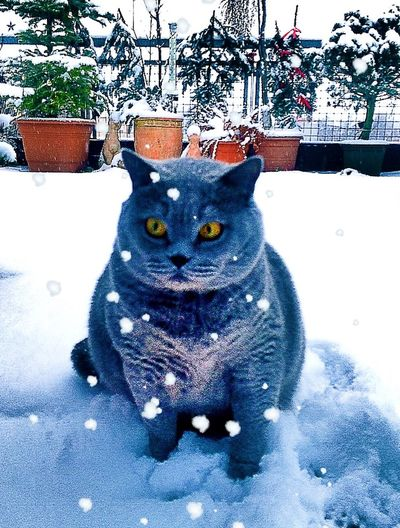 """Snow ❄ Snow Taking Photos Mycat♥ Cat My Sweetie Shocked Funny Funny Cat Hello World Taking Photos Taking Pictures """"who did this ?"""" ❄️❄️❄️🙀🙀🙀😻😻😻"""