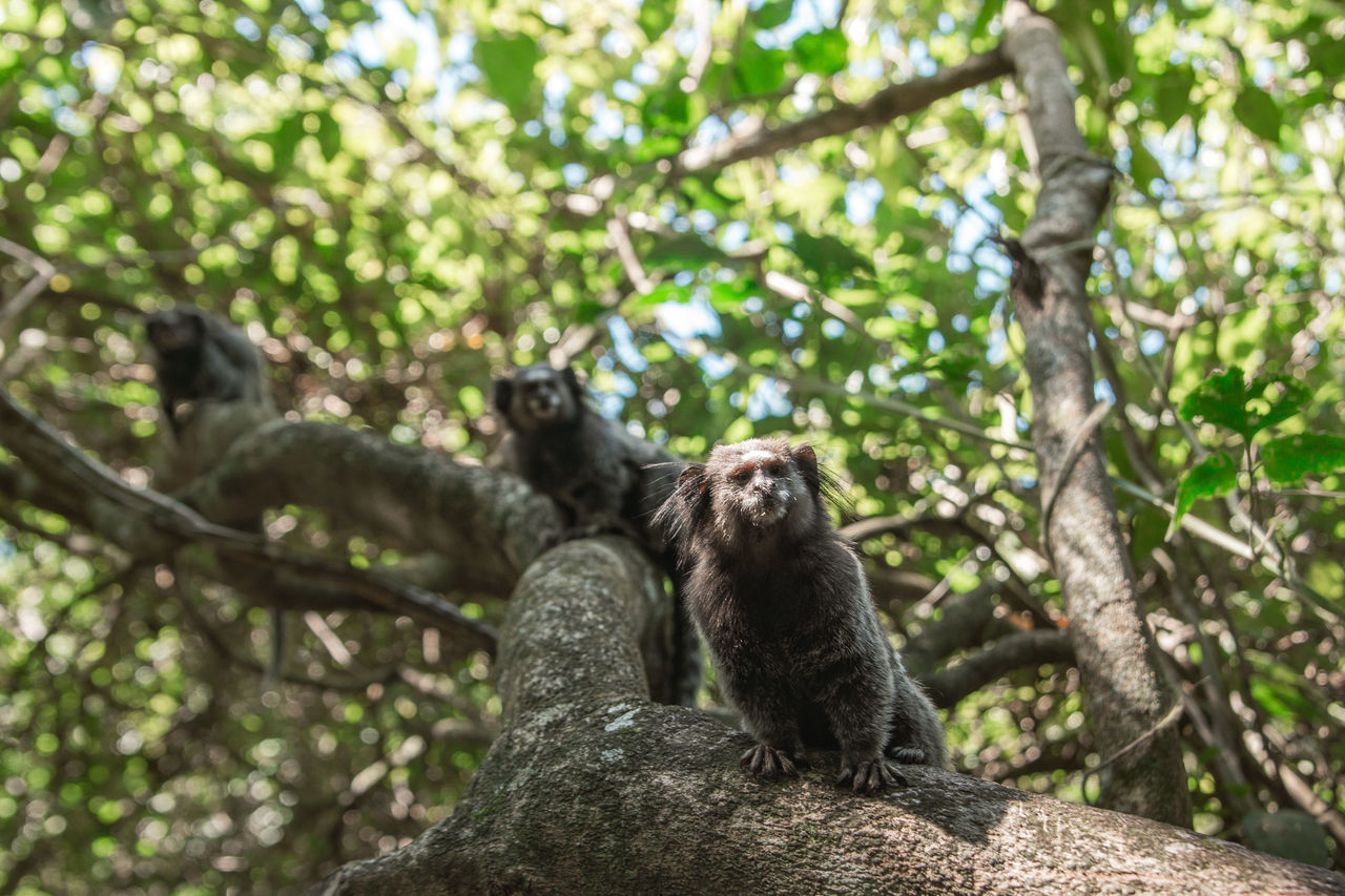 Low Angle View Of Monkeys On Tree
