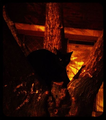Darkness Cat♡ Night Photography Nightmare