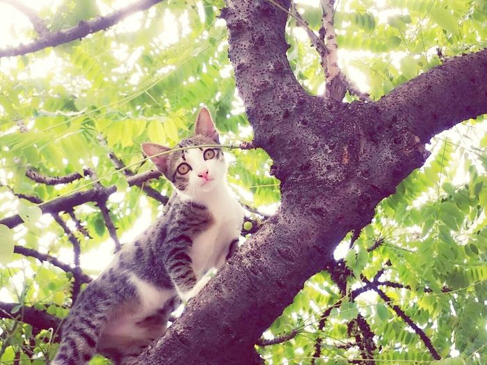 แมวน้อยเข้าขึ้นต้นไม้บน....แนวน้อยน่ารักก