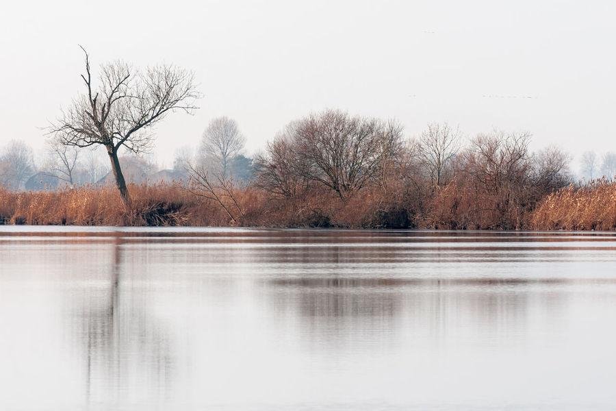 Landscape Sony A700 The Netherlands Zeeland  Zeeuws Vlaanderen Winter Lake EyeEm Market ©