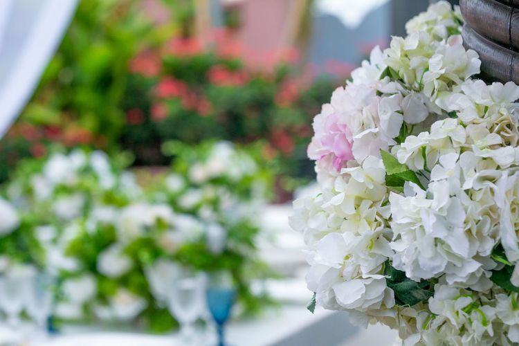 Flowers Set Up