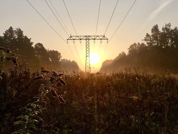 Guten Morgen Sky Plant Nature Field Growth Tree Electricity  Tranquility Electricity Pylon Power Line  Landscape Land Cable Tranquil Scene Sunset Environment Beauty In Nature Technology Power Supply No People