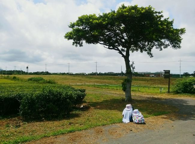 Greentea Farm Tree And Sky Backpacking Resting Travel Relaxing No People Farm Tree JEJU ISLAND  Farm Land Green Color
